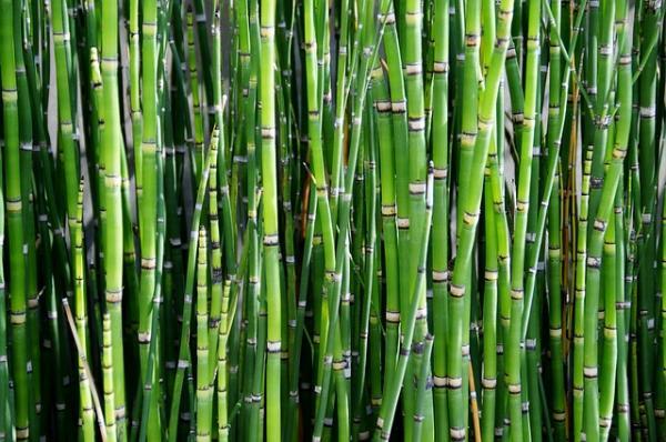 18 plantas de sol y sombra: nombres y características - Bambú: cuidados y características