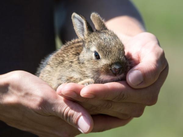 Sarna en conejos: síntomas y cómo curarla - Cómo prevenir la sarna en conejos