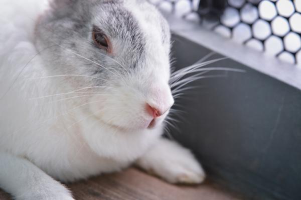 Por qué mi conejo no bebe agua - Por qué mi conejo no quiere beber agua - causas principales