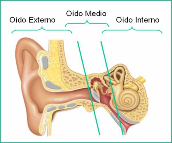 Cuáles son los huesos de los oídos - ¿Cómo está compuesto el oído?