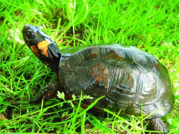 Significado de la tortuga como animal de poder - La tortuga como animal de poder: sus principales poderes