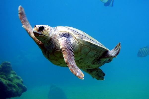 Significado de la tortuga como animal de poder - El poder de la tortuga en la cultura australiana
