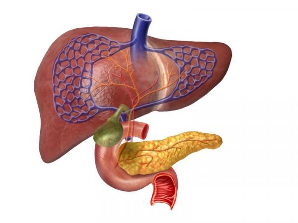 9 alimentos prohibidos para la vesícula biliar inflamada