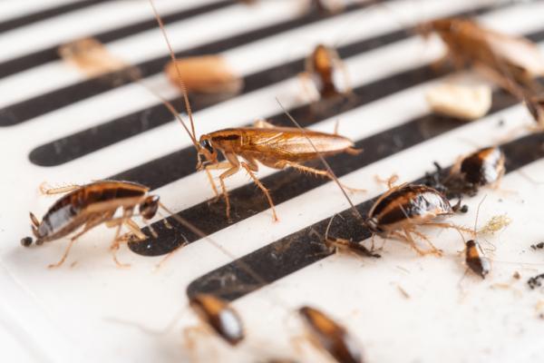Cómo hacer trampas para cucarachas caseras - Trampas para cucarachas con cinta adhesiva