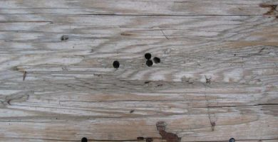 Cómo eliminar las polillas de la madera