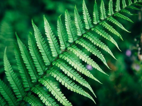 Cómo respiran las plantas - Cómo y por dónde respiran las plantas