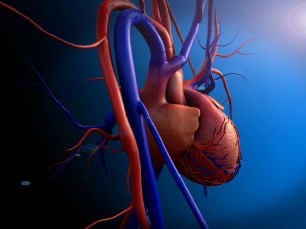 Cuál es la función del corazón