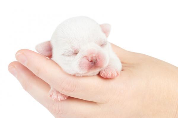 Cuándo abren los ojos los perros recién nacidos