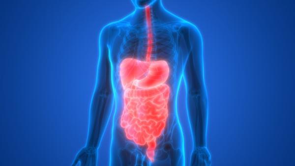 Diferencia entre sistema y aparato - Sistemas del cuerpo humano