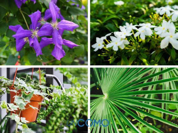Las mejores plantas de exterior en maceta - Plantas de exterior resistentes al frío y al calor