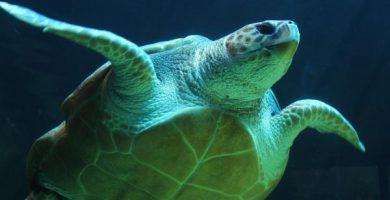 Significado de la tortuga como animal de poder