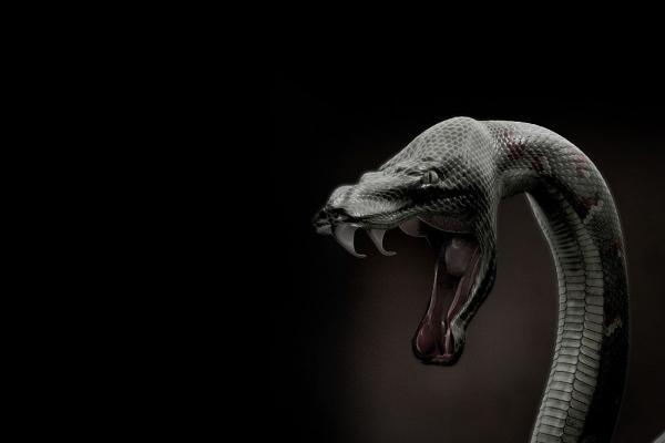 Qué significa soñar con serpientes negras - Qué significa soñar que una serpiente negra te muerde