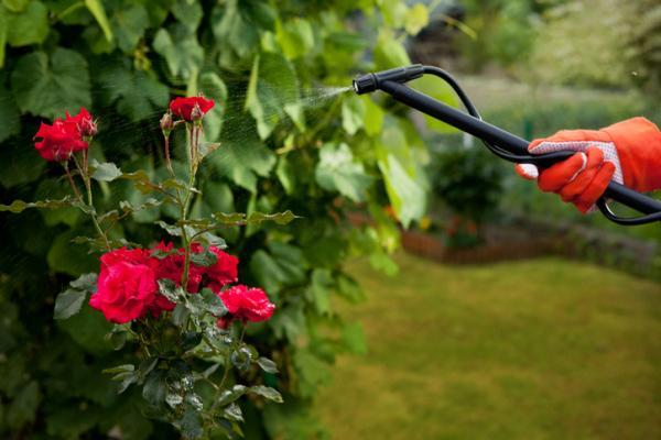 Cómo utilizar el vinagre para las plantas - Cómo usar el vinagre para las plantas como insecticida y repelente