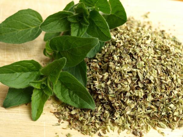 Nombres de plantas medicinales y para qué sirven - Orégano