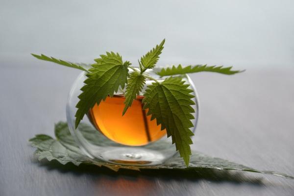 Nombres de plantas medicinales y para qué sirven - Ortiga