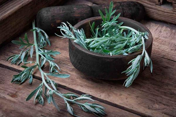 Nombres de plantas medicinales y para qué sirven - Artemisa