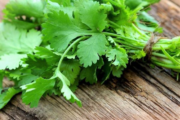 Nombres de plantas medicinales y para qué sirven - Cilantro