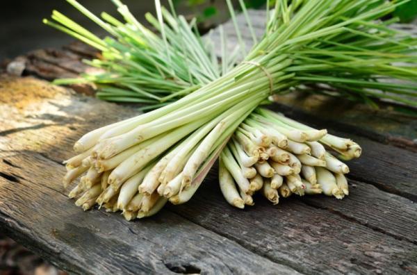 Nombres de plantas medicinales y para qué sirven - Limoncillo