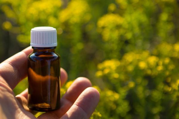 Aceite del árbol de té: para qué sirve, propiedades y contraindicaciones - Propiedades del aceite del árbol de té
