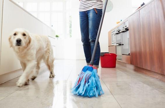 Cuánto tiempo dura el moquillo en una casa - la respuesta aquí - Cuánto tiempo dura el moquillo en el ambiente