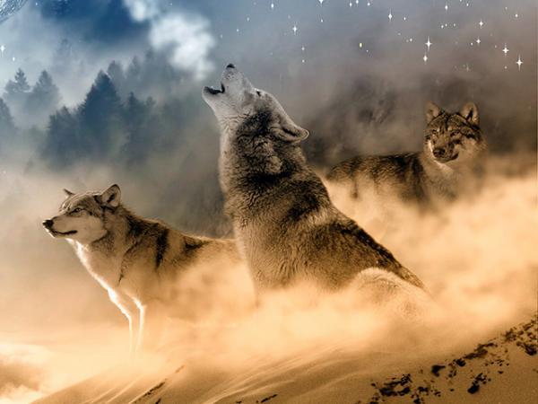 Qué significa el lobo como animal de poder - Significado mitológico del lobo