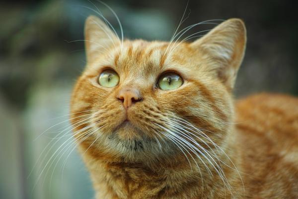 ¿Es malo el aloe vera para los gatos? - descubre aquí la respuesta - Cómo regenerar la piel de un gato con aloe vera