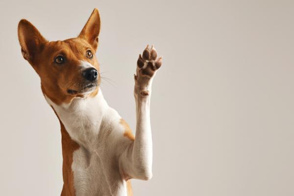 Cómo limpiar las patas de mi perro después de pasear - ¿Se le pueden lavar a diario las patas a un perro?