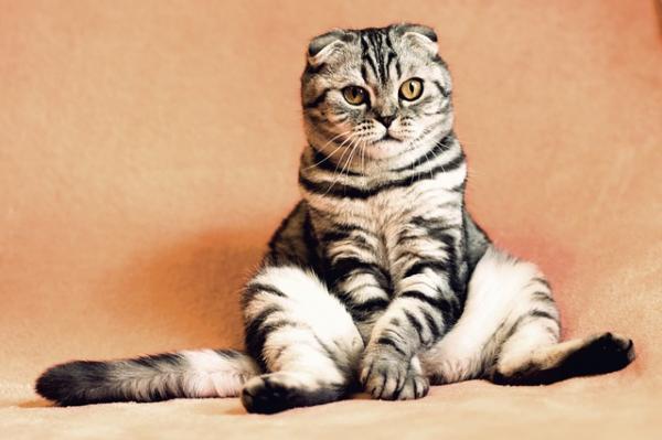 Cuándo empezar a bañar a un gato - aquí tienes la respuesta - Cómo bañar a un gato en casa