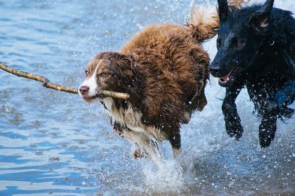 Por qué los perros huelen mal cuando se mojan - ¡descúbrelo aquí! - La causa del mal olor en los perros mojados