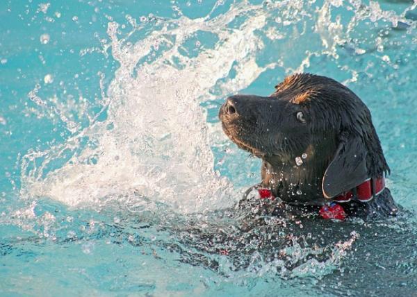 Por qué los perros huelen mal cuando se mojan - ¡descúbrelo aquí! - Consejos de higiene para perros