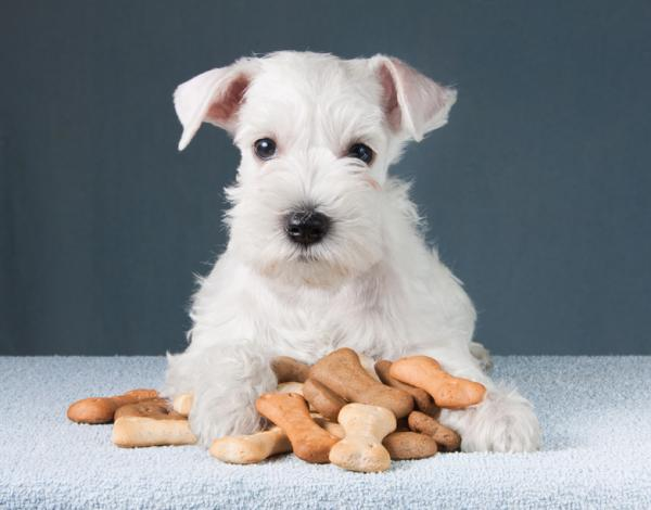 Cómo hacer que mi cachorro no muerda todo - Recompensar al cachorro con golosinas