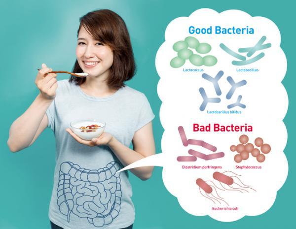 Cuáles son las partes del aparato digestivo - El páncreas y las bacterias intestinales