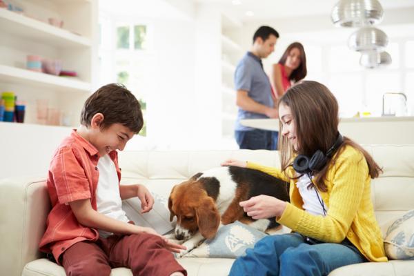 Por qué mi perro me sigue a todos lados - Tu perro te sigue a todas partes porque es muy social