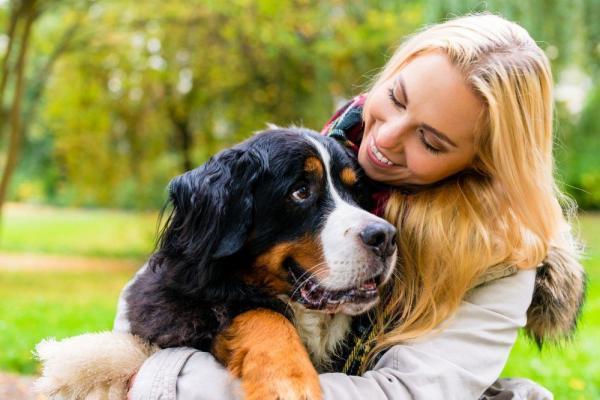 Por qué mi perro me sigue a todos lados - Tu perro te sigue a todos lados porque se siente seguro
