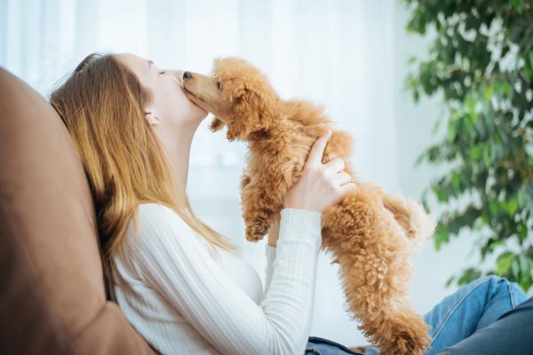 Por qué mi perro me sigue a todos lados - Por qué mi cachorro me sigue a todas partes