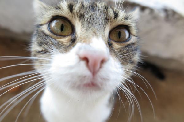 Cómo limpiar las patas de mi gato - Tranquilizar al gato para limpiarlo
