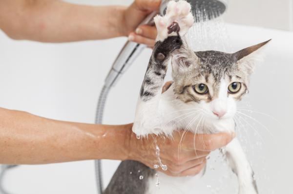 Cómo limpiar las patas de mi gato - Cómo secar al gato tras limpiarle las patas