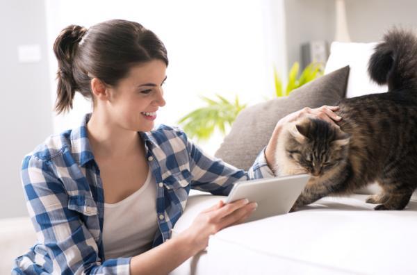 ¿El SIDA felino se contagia a humanos? - aquí la respuesta - Inmunodeficiencia felina o SIDA felino, ¿es posible el contagio a humanos?