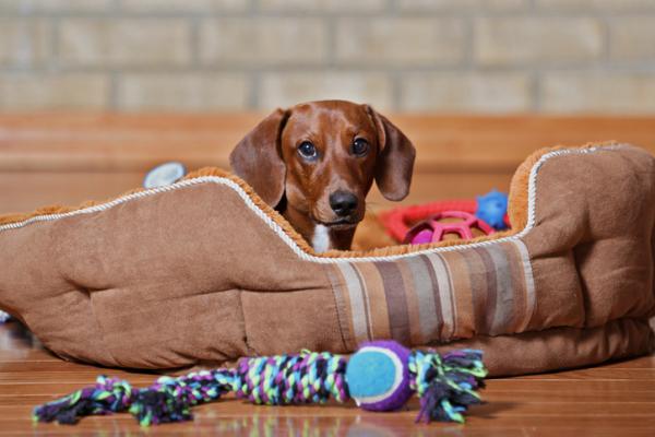 +10 regalos de Navidad para mi perro - ideas originales y bonitas - Cama y manta para dormir
