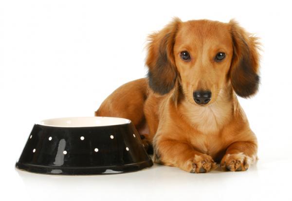+10 regalos de Navidad para mi perro - ideas originales y bonitas - Comedero y bebedero para perros