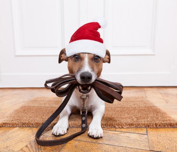 +10 regalos de Navidad para mi perro - ideas originales y bonitas - Correa, collar y chapa nuevos para tu perro