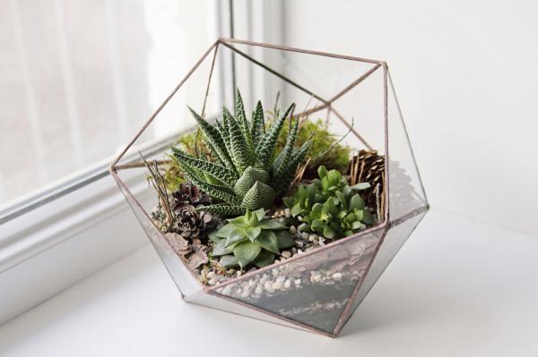 Cómo cuidar las plantas suculentas - guía de cuidados - Cómo regar las plantas suculentas