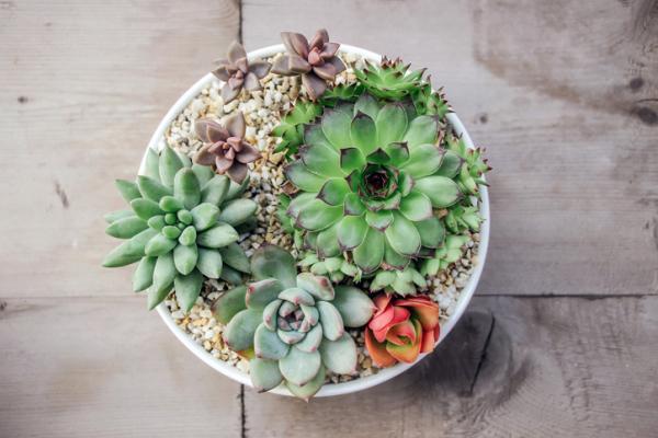 Cómo cuidar las plantas suculentas - guía de cuidados - Un buen drenaje es esencial para las plantas suculentas