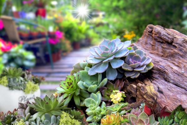 Cómo cuidar las plantas suculentas - guía de cuidados - Cómo cuidar suculentas en verano