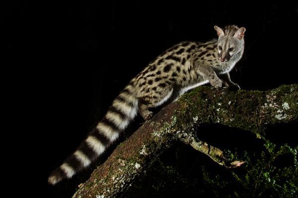 Cómo los animales nocturnos pueden ver en la oscuridad - Lista de animales nocturnos y semi-nocturnos