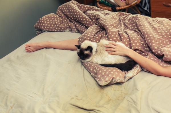 Mi gato duerme mucho, ¿por qué? - Mi gato duerme mucho, ¿es normal o no?