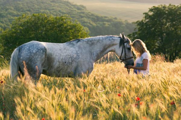 Cómo ser veterinario - los mejores consejos - Otros estudios relacionados con la veterinaria y el trabajo con animales
