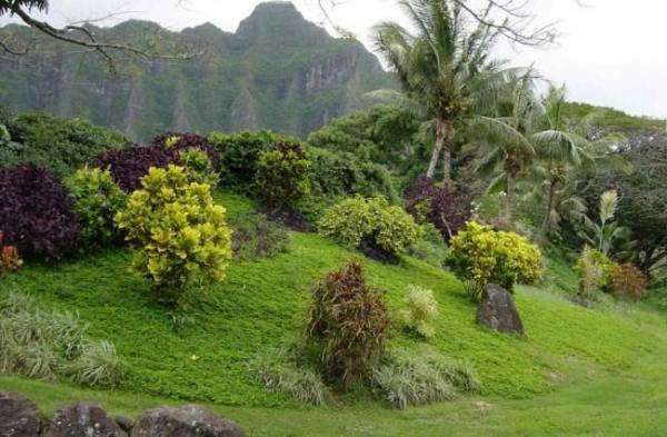 Isla y lugares donde se rodó Lost - Isla en la que se rodó Lost