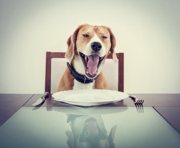Cúrcuma para perros - beneficios y dosis - Receta casera con cúrcuma para perros