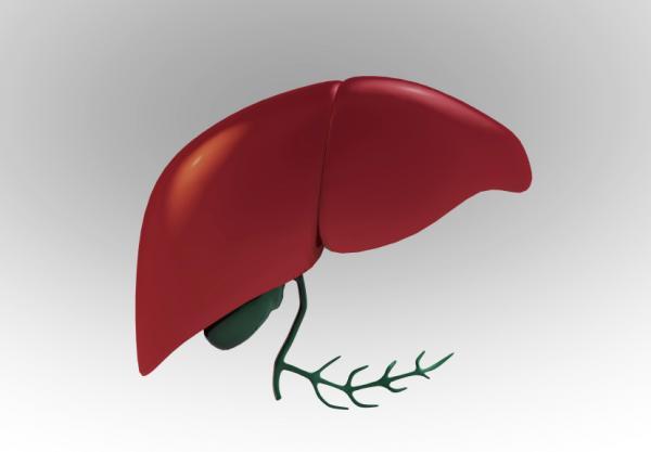 Beneficios del aceite de oliva en ayunas - Aceite de oliva en ayunas para el hígado